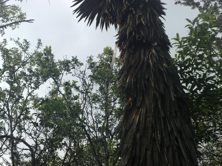 Víbora: muda de piel - palma
