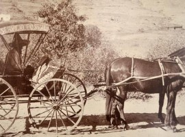 transporte correos de mexico en burro